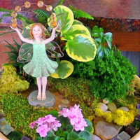 Miniature and Fairy Gardens