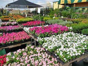 Covington S Nursery And Garden Center